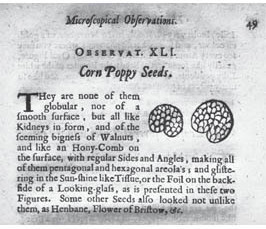 Picturing Seeds of Poppy: Microscopes, Specimens and Visualization in 17th Century England<i></i><sub></sub><sup></sup>